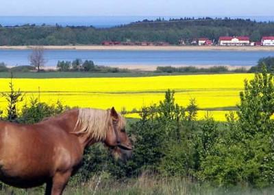 Domki Letniskowe nad morzem. Lidia Szulc Wicie k. Darłowa